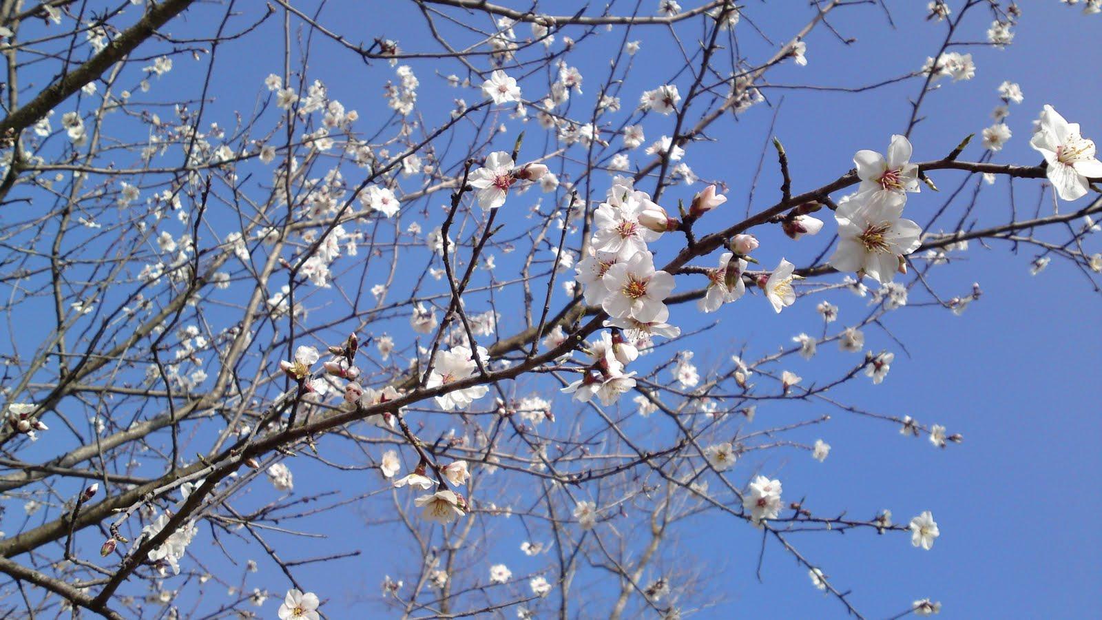 22a printemps à combalet (8.03.2011) 001